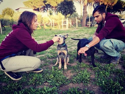 educare-un-cucciolo-2