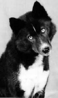 La storia di balto il cane lupo che diventò un eroe spiral news